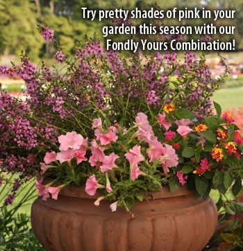 Try pretty shades of pink in your garden this season with our Fondly Yours Combination!