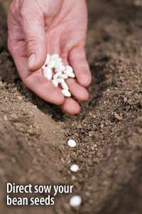10 Seeds You Should Direct-sow This Spring