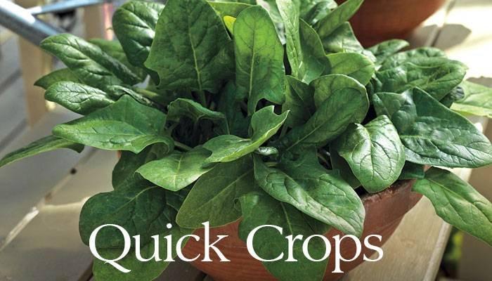 Quick Crops