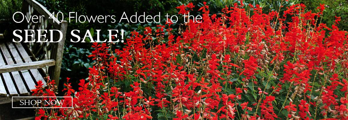 Over 40 Flowers Added to the Seed Sale