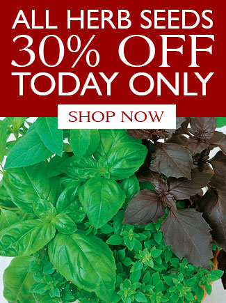 All Herb Seeds 30% OFF TODAY ONLY - SHOP NOW