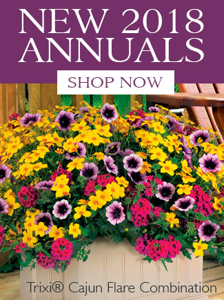 NEW 2018 ANNUAL PLANTS