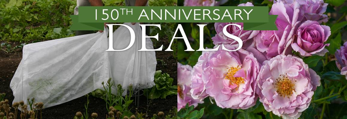150th Anniversary Deals