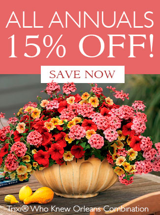 ALL ANNUALS 15% OFF - SAVE NOW
