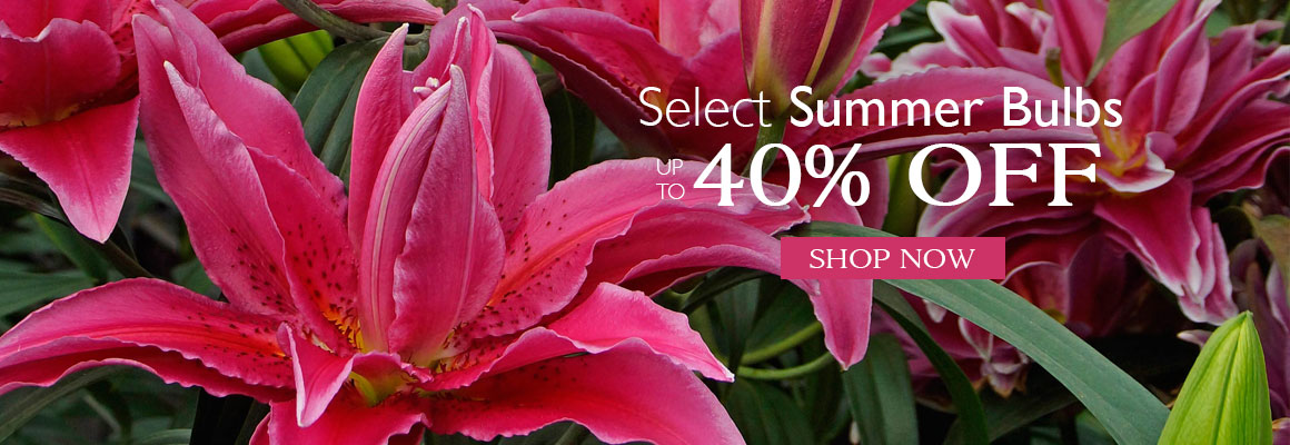 Select Summer Bulbs up to 40% OFF - SHOP NOW