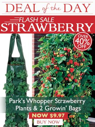 Flash Sale - Whopper Strawberry and Growin' Bags - now $9.97!