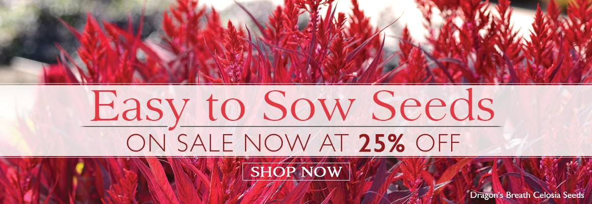 Easy to Sow Seeds on Sale at 25% Off!