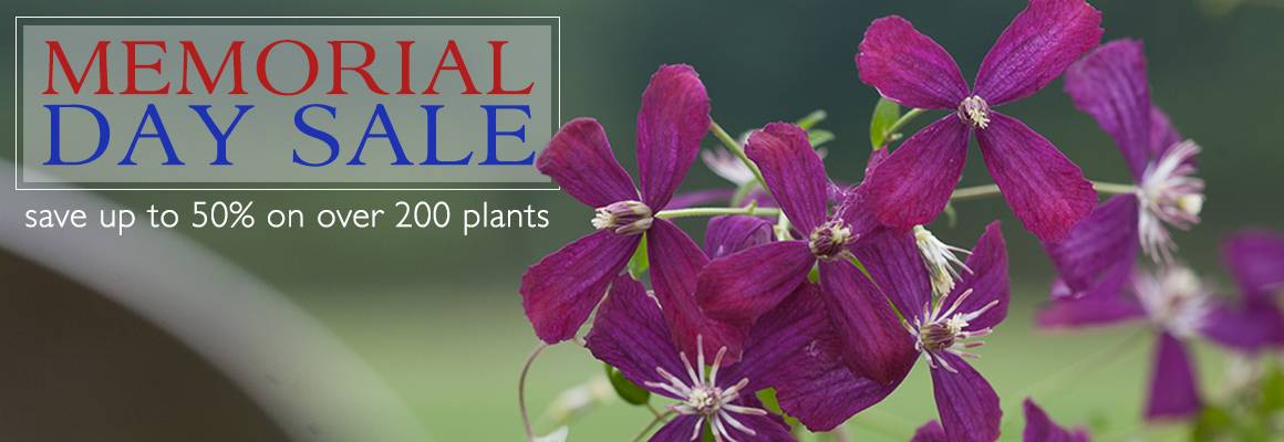 Memorial Day Sale - Save up to 50% on Over 200 Plants!