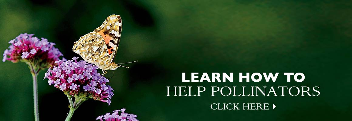 Learn How to Help Pollinators