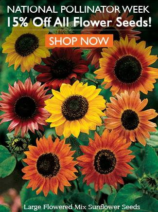National Pollinator Week - All Flowers Seeds are 15% Off!