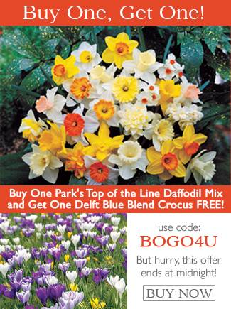 BOGO - Buy One Narcissus Top-of-the-Line Mix and get a Crocus Delft Blue Blend Free with code BOGO4U