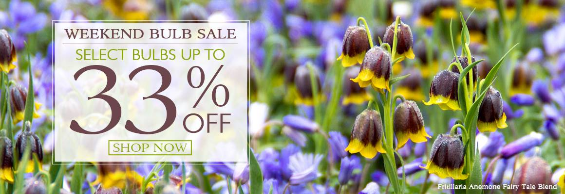 Weekend Bulb Sale - Select Bulbs up to 33% Off!