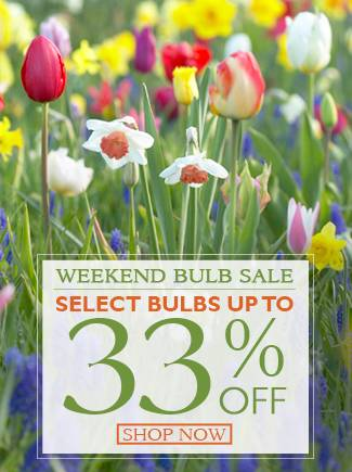 Weekend Bulb Sale - Select Bulbs up to 33% Off - SHOP NOW