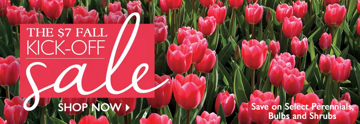 The $7 Fall Kick-off Sale - Select Perennials, Shrubs, and Bulbs Only $7!