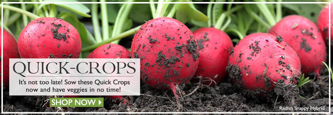 Crops that finish in no time! - SHOP NOW