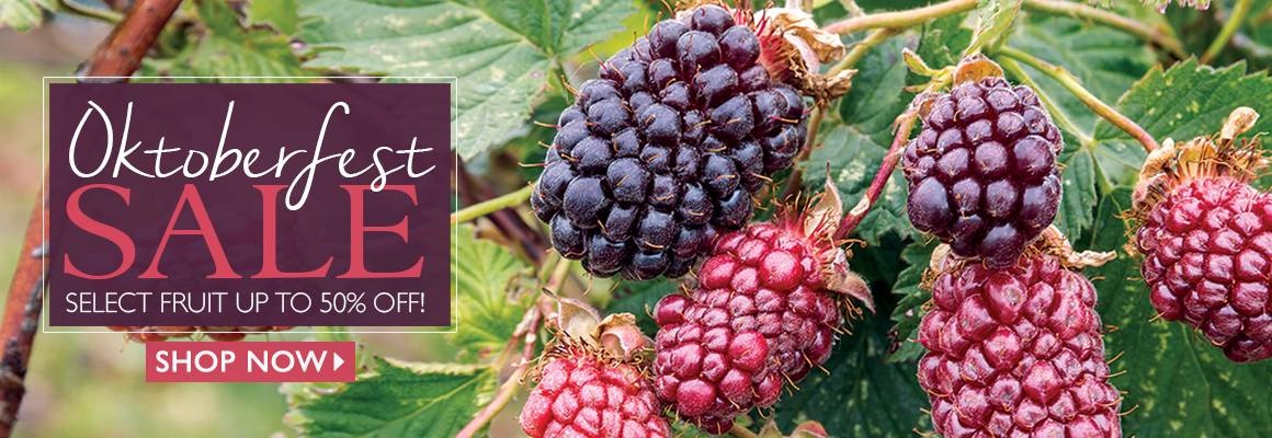 Oktoberfest - Select Fruit up to 60% Off! - SHOP NOW