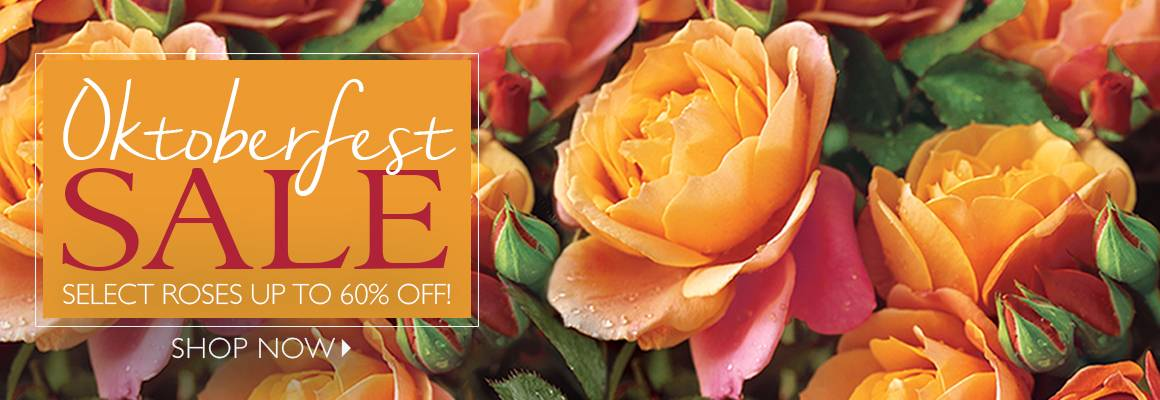 Oktoberfest - Select Roses up to 60% Off! - SHOP NOW