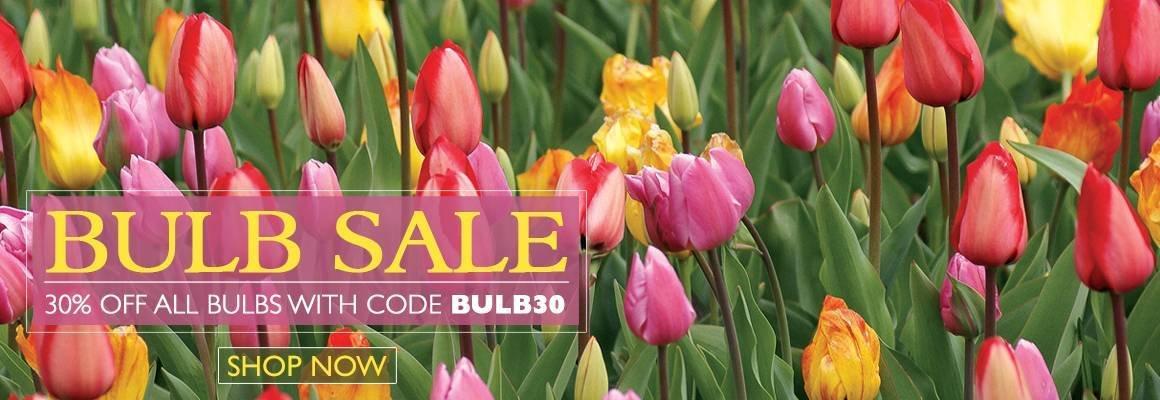 Bulb Sale - Save 30% on All Bulbs with Code BULB30