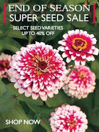 Select Seed Varieties up to 40% Off - SHOP NOW