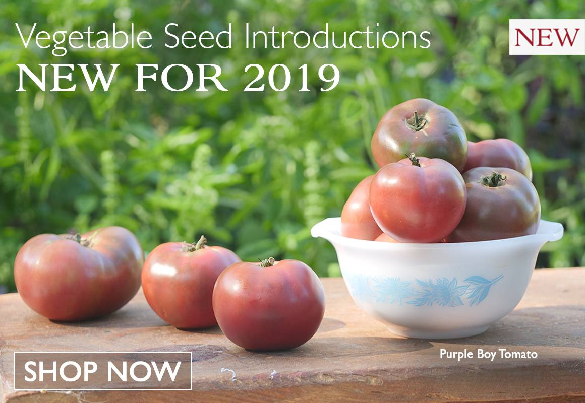 Vegetable Seed Introductions New For 2019 Now