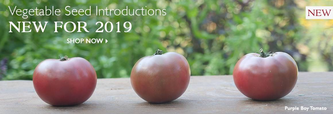 Vegetable Seed Introductions - New for 2019 - SHOP NOW