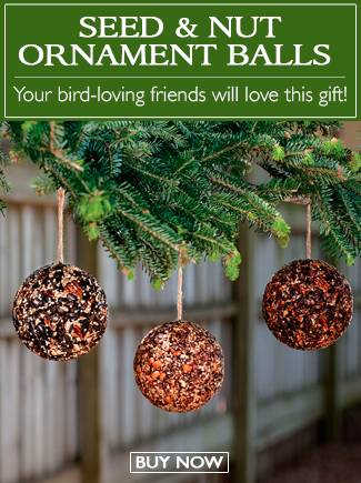 Seed & Nut Ornament Balls - Your bird-loving friends will love this gift - BUY NOW