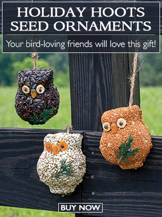 Holiday Hoots Seed Ornaments - Your bird-loving friends will love this gift! - BUY NOW