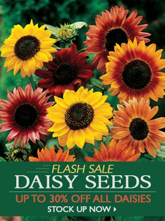 Flash Sale - Save up to 30% on ALL Daisy Seeds! - SHOP NOW