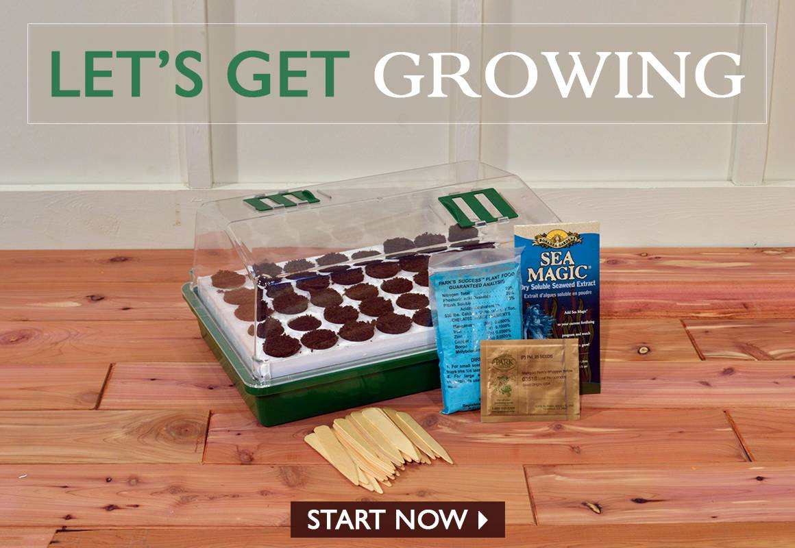 Lets Get Growing - START GROWING NOW