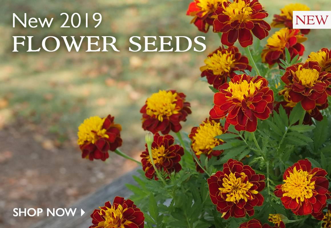 New 2019 Flower Seeds - SHOP NOW