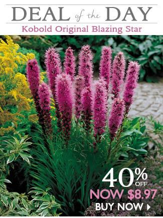 Deal of the Day - Kobold Original Blazing Star - NOW $8.97 - SHOP NOW