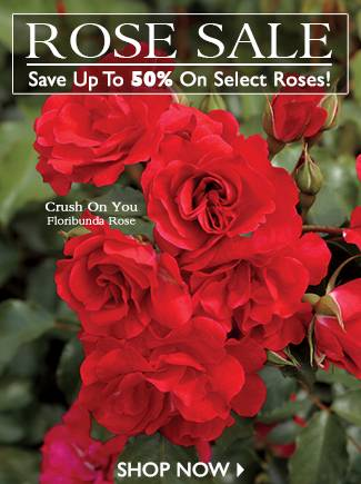 Save up to 50% on Select Roses - SHOP NOW