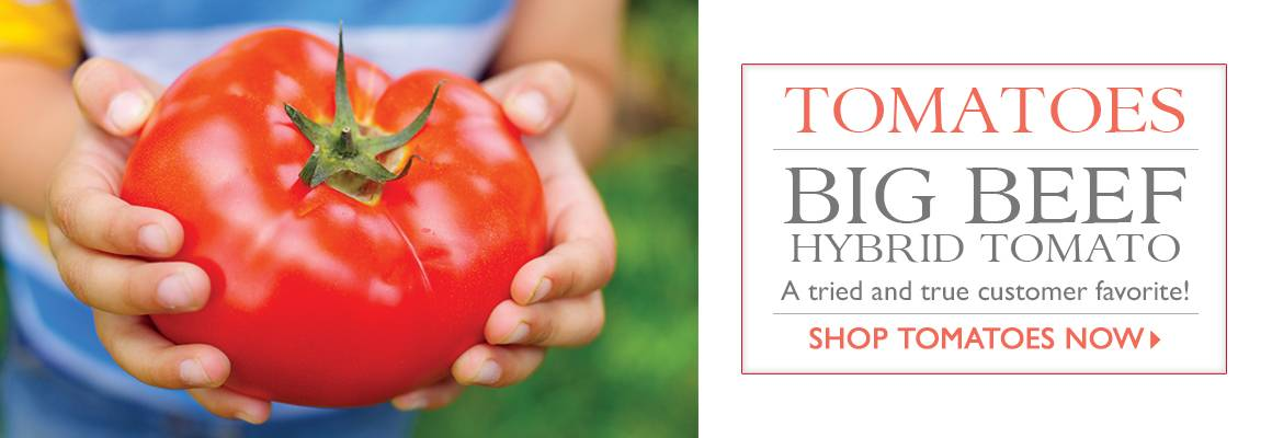 The Best Tomatoes Come from Park! - SHOP TOMATOES NOW