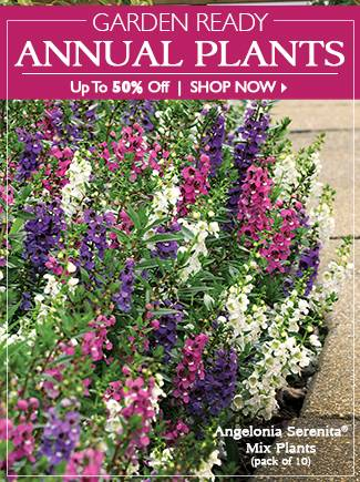 Save Up To 50% on Garden Ready Annual Plants - SHOP NOW