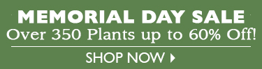 Memorial Day Sale - Over 350 Plants up to 60% Off! - SHOP NOW