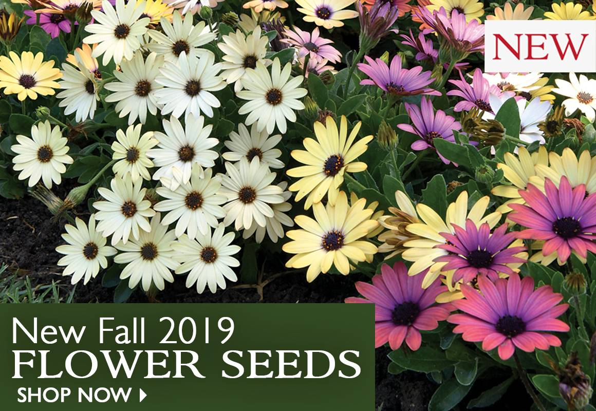 New 2019 Fall Flower Seeds   SHOP NOW