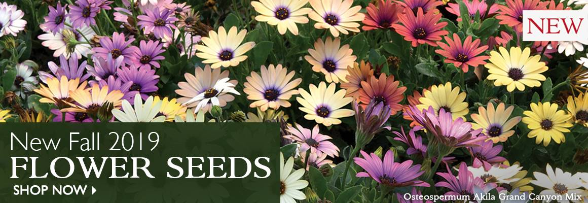 New 2019 Fall Flower Seeds - SHOP NOW