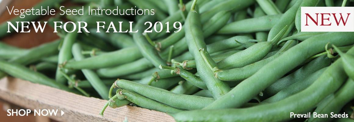 Vegetable Seed Introductions for Fall 2019 - SHOP NOW