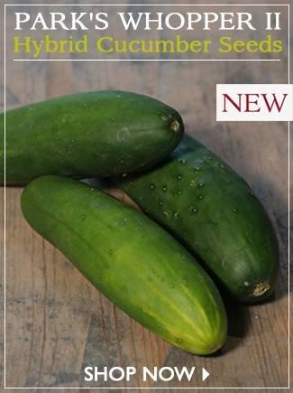 Park's Whopper II Hybrid Cucumber Seeds - SHOP NOW