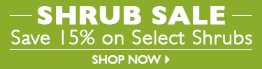 Shrub Sale - Save 15% On Select Shrubs - SHOP NOW