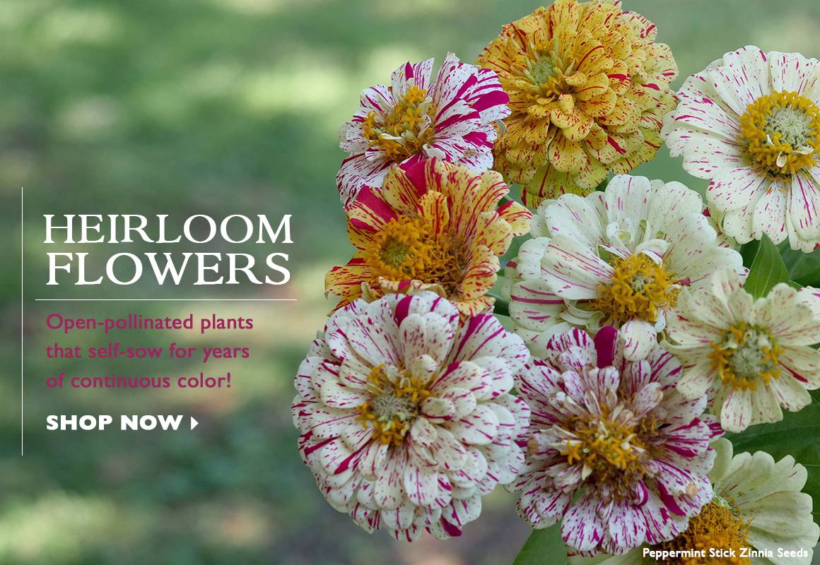 Heirloom Flower Seeds - SHOP NOW