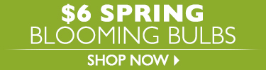 $6 Spring Blooming Bulbs - Shop Now