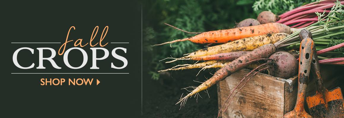 Fall Crops - SHOP NOW