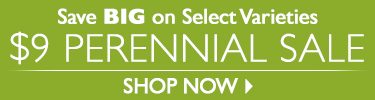 $9 Perennials - Save BIG on Select Varieties - SHOP NOW