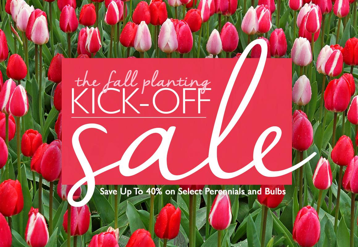The Fall Planting Kick-off Sale - Save up to 40% on Select Bulbs and Perennials - SHOP NOW