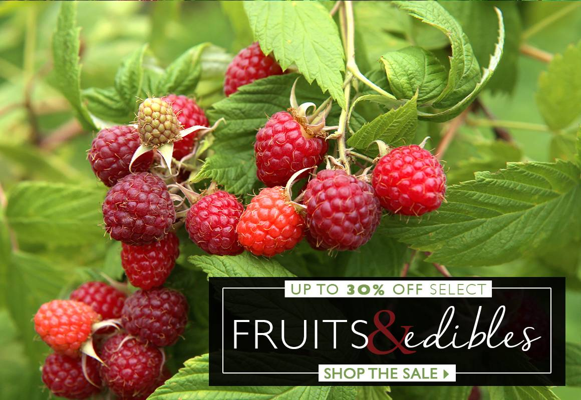 Save Up To 30% On Select Fruits and Edibles - SHOP NOW