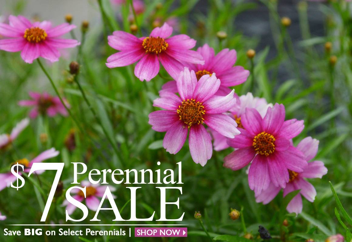 $7 Perennial Sale - SHOP NOW