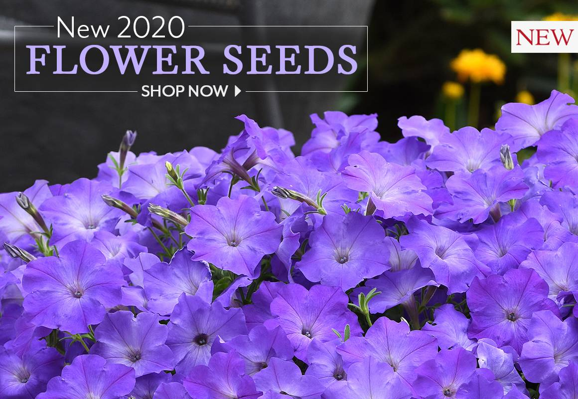 Shop New Flower Seeds