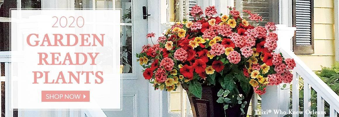 Garden Ready Plants - Stunning & Simple. Easy & Elegant. - SHOP NOW