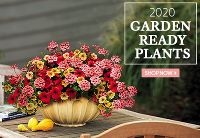 Garden Ready Plants - Stunning & Simple. Easy & Elegant. - SHOP NOW